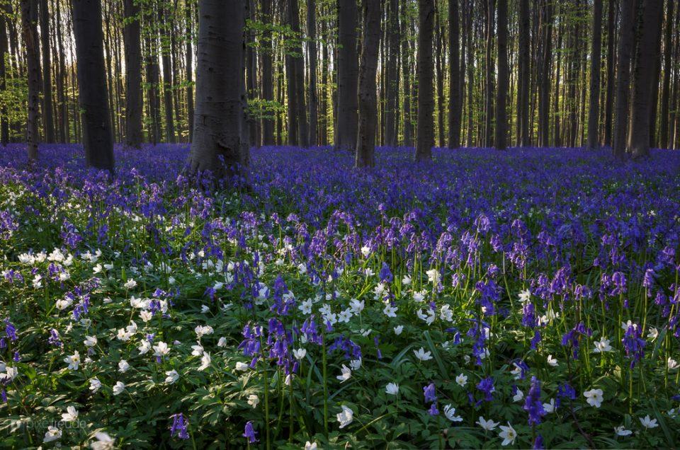 Die Blumen des Frühlings..