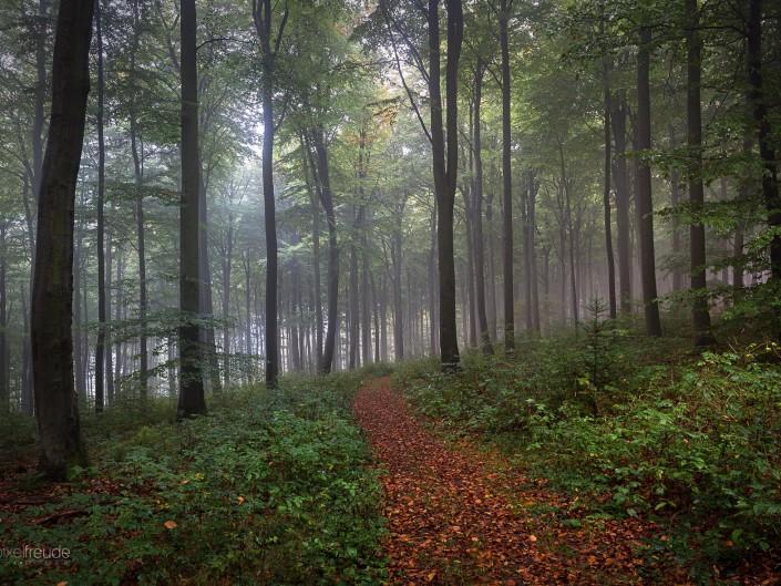 Herbststimmung am Donnersberg