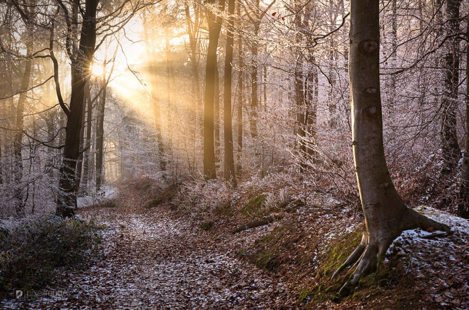 Durch den Märchenwald