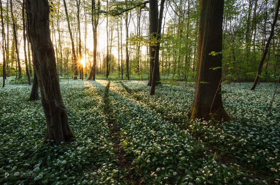 Ein Weg ins Grüne