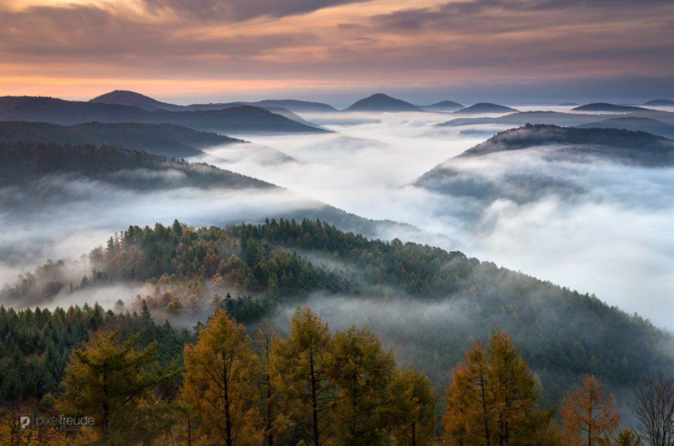 Nebel über dem Pfälzerwald