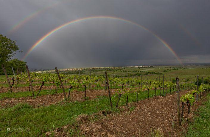 Regenbogen über der Pfalz