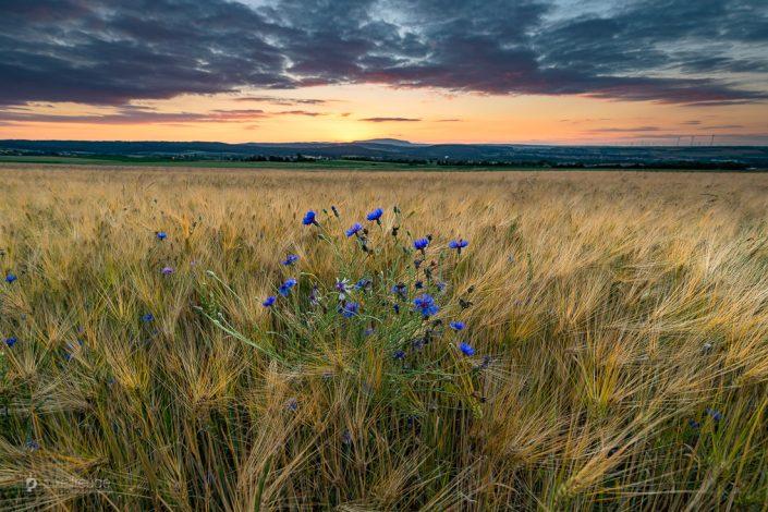Ein friedlicher Sommerabend