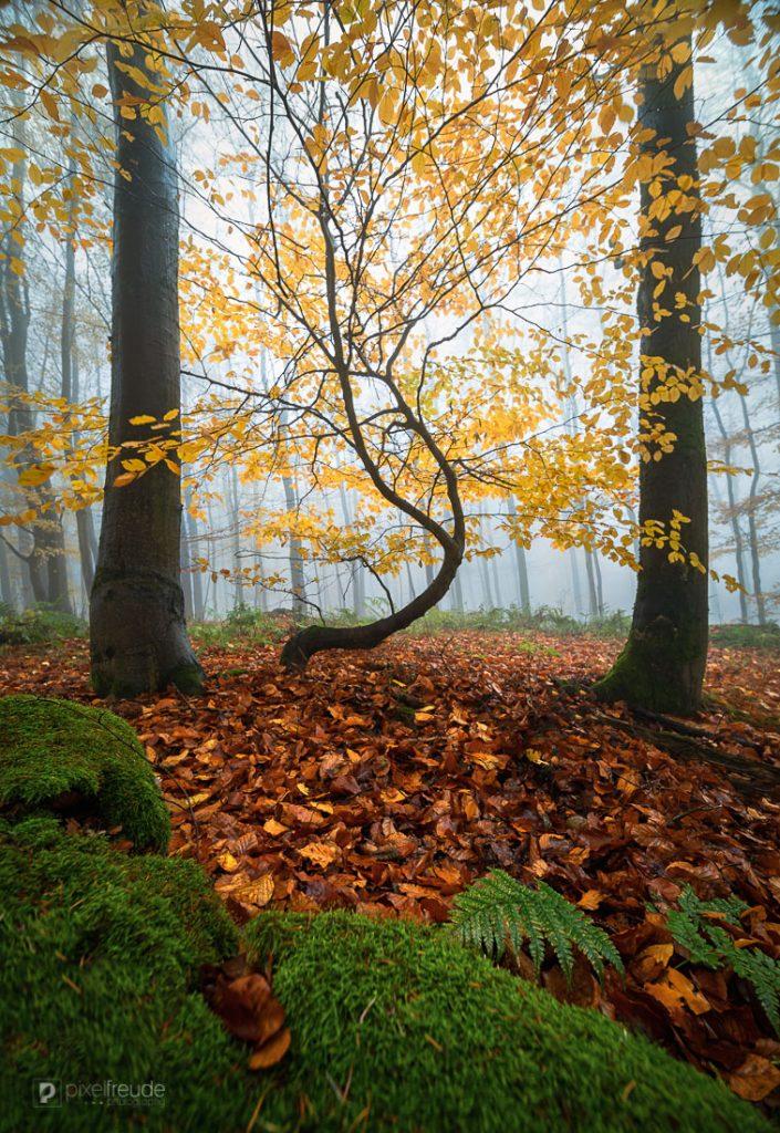 Der tanzende Baum