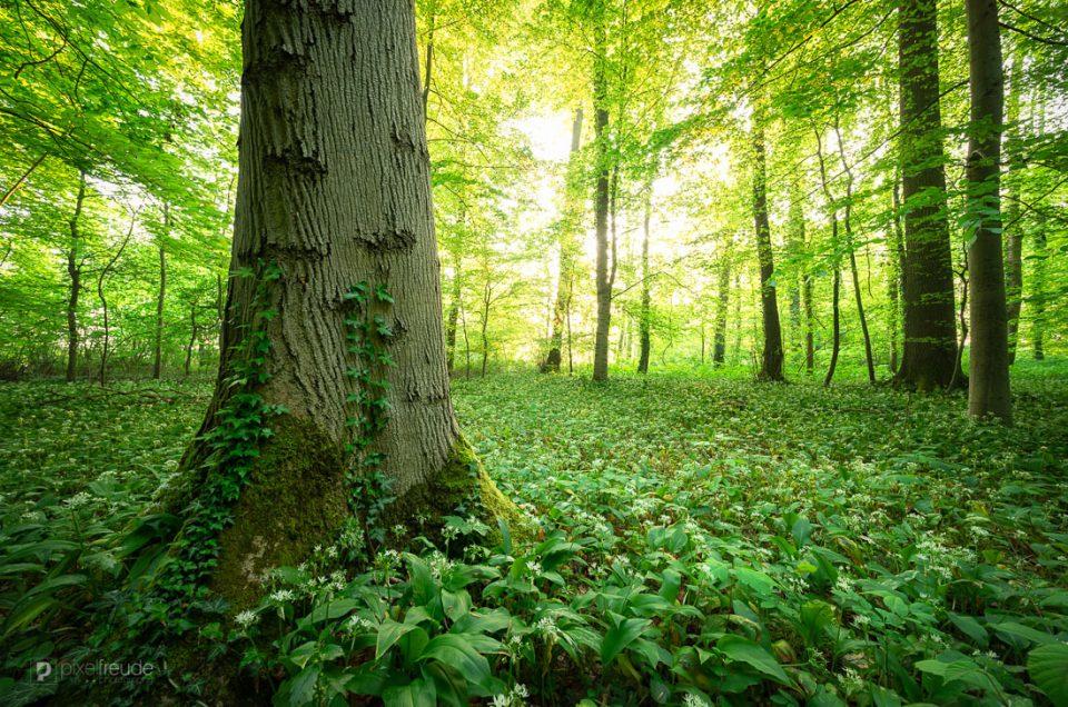Frühling im Wald